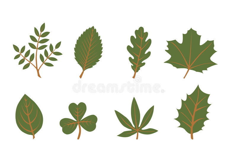 Set of vector leaf shapes. On white background stock illustration