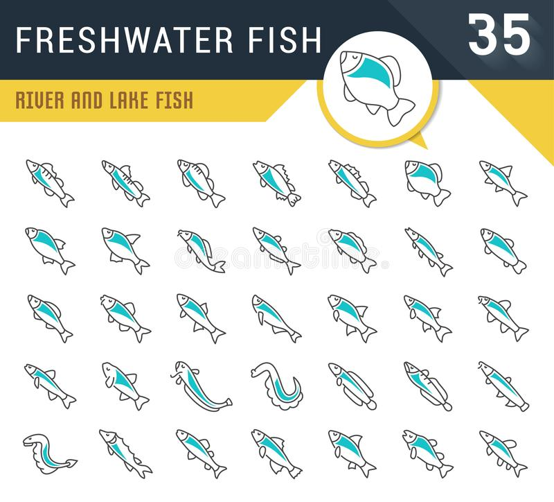 Set Vector Line Icons of Freshwater Fish. Set of vector line icons, sign and symbols of freshwater fish for modern concepts, web and apps. Collection of royalty free illustration