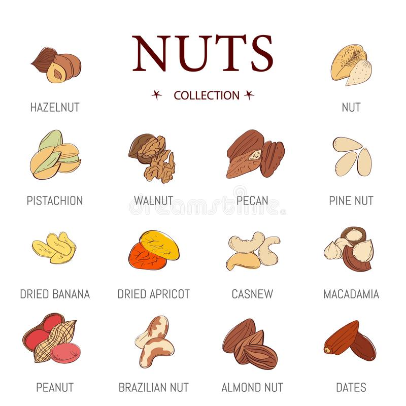 Set of vector nuts in flat design. Collection of edible nuts icons featuring hazelnut, peanut royalty free illustration