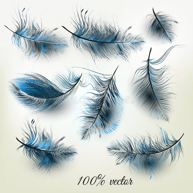 Set of vector realistic blue feathers royalty free illustration
