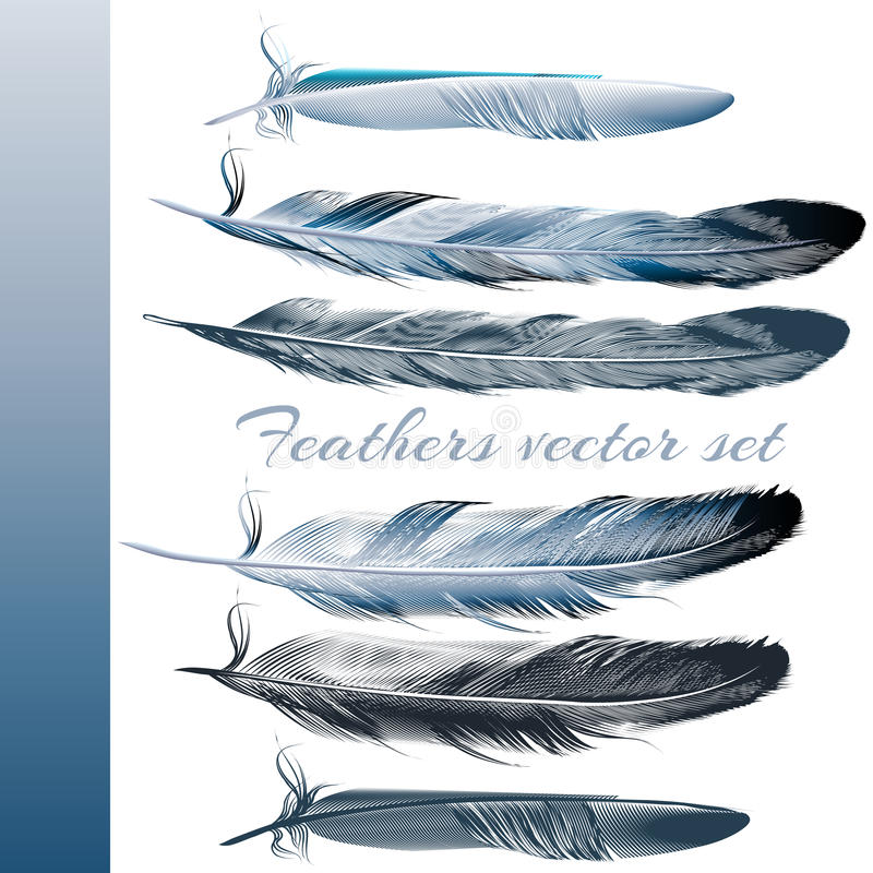 Set of vector realistic colorful feathers royalty free illustration