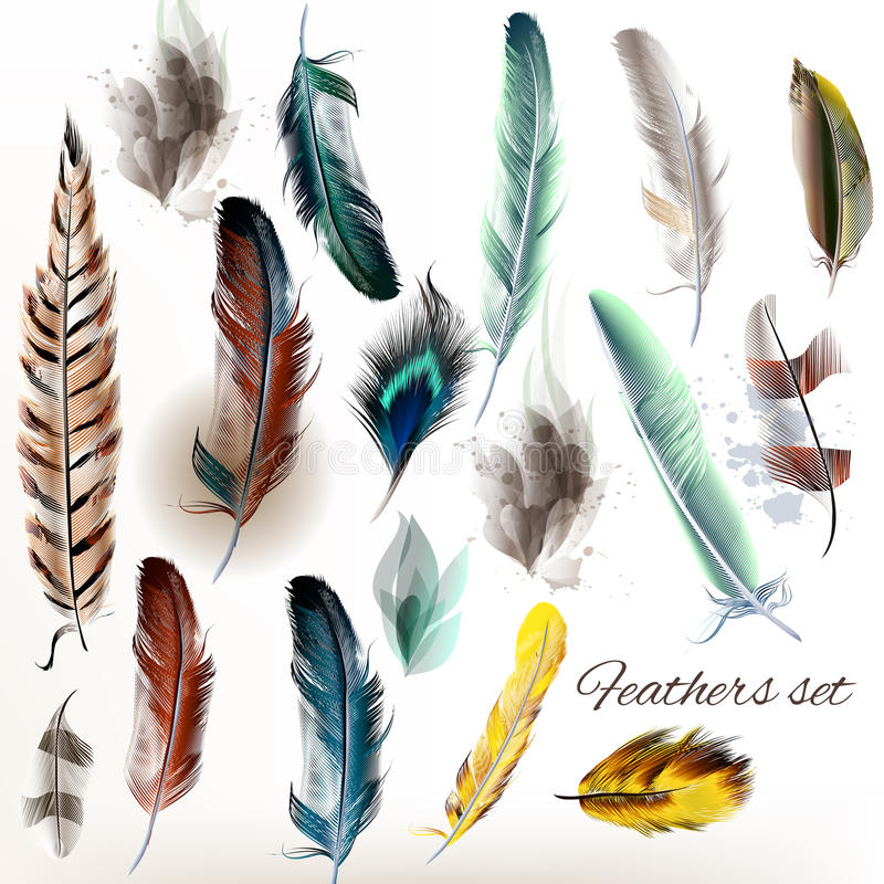 Set of vector realistic colorful feathers vector illustration