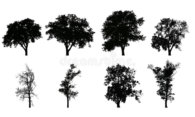Set of vector realistic silhouettes of deciduous trees vector illustration