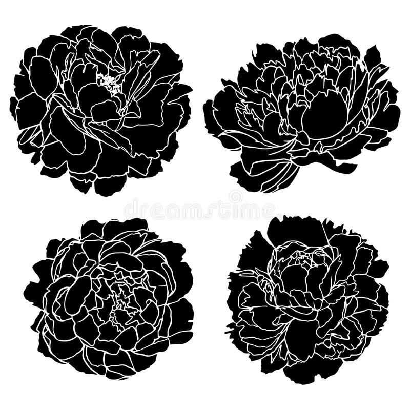 Set vector silhouettes of hand drawn peony flowers isolated.  vector illustration