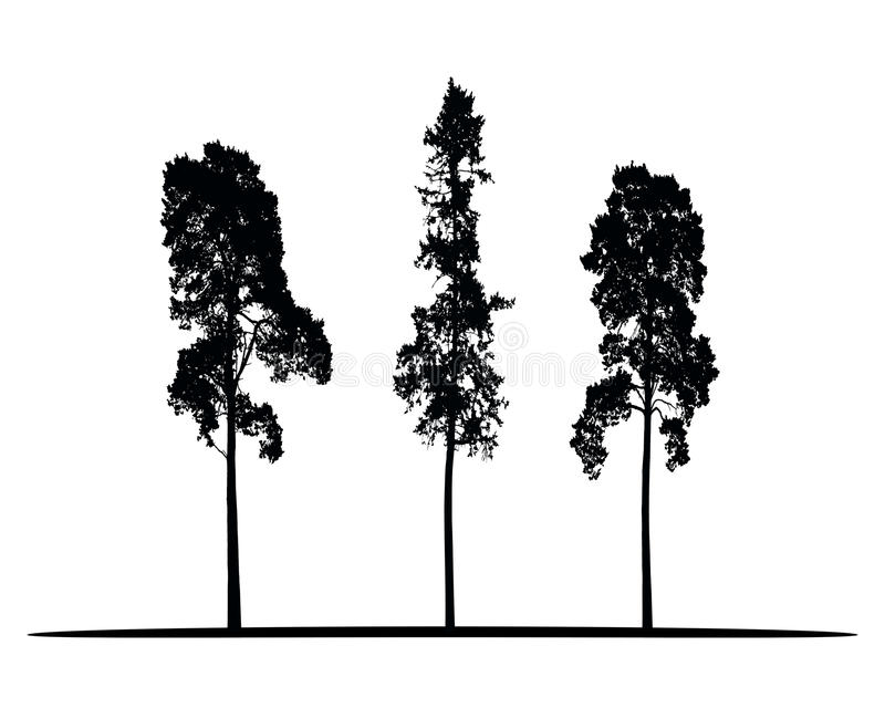Set of vector silhouettes of high coniferous trees stock illustration