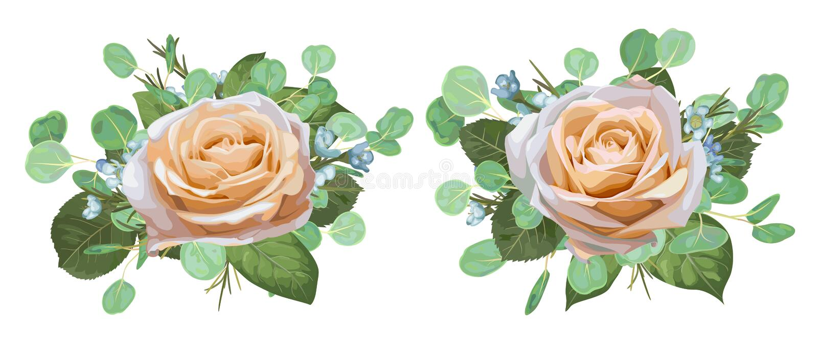 Set of vector watercolor beautiful roses with eucalyptus leaves stock illustration