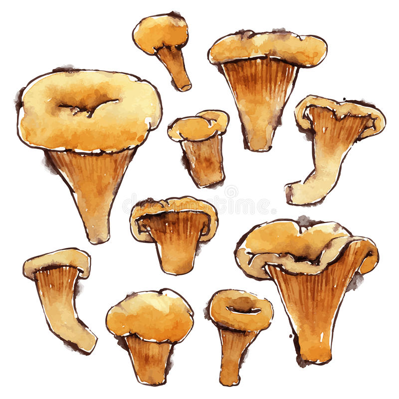 Set of Vector Watercolor Chanterelles royalty free illustration