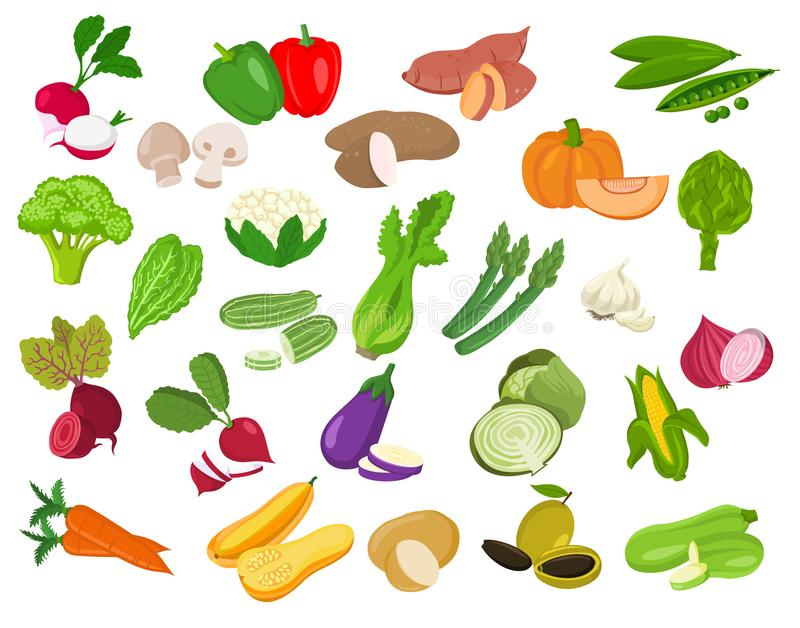 Set of vegetable illustration.Vegetable icons. Vector isolated on white background vector illustration
