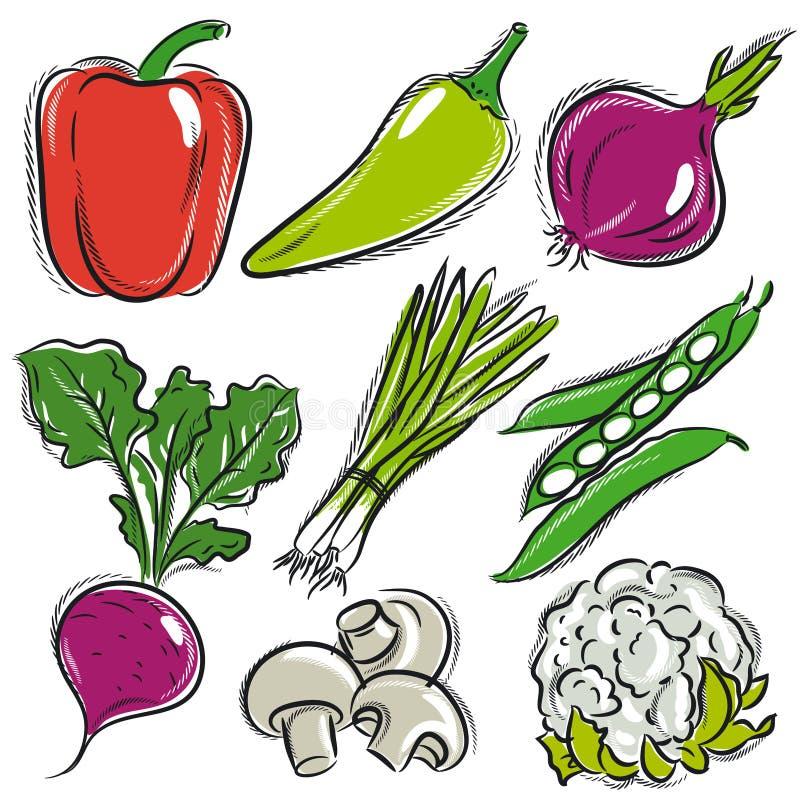 Set of vegetable, pepper,onions, beans. Vector illustration royalty free illustration