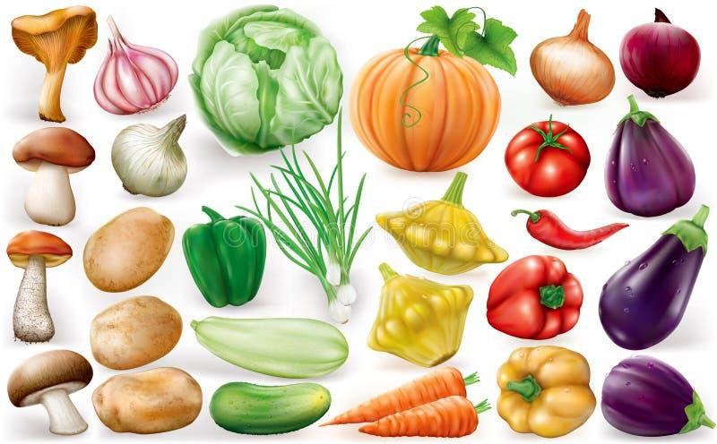 Set of vegetable vector illustration