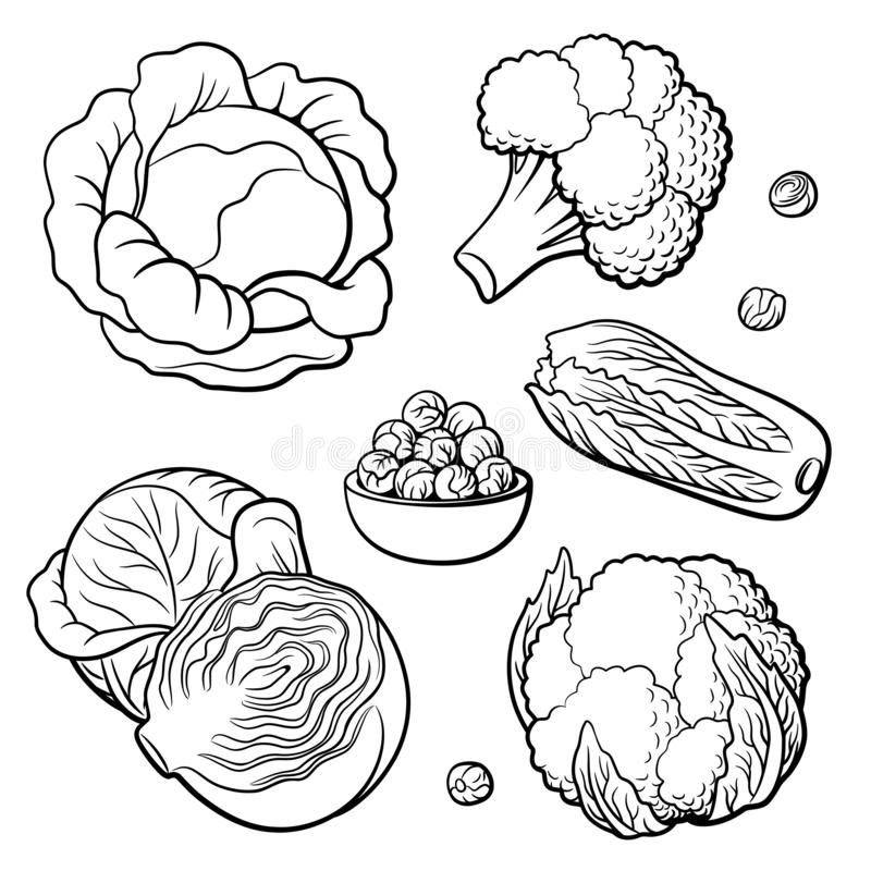Set of vegetables. Cabbage, broccoli, cauliflower, Chinese cabbage and Brussels sprouts stock illustration