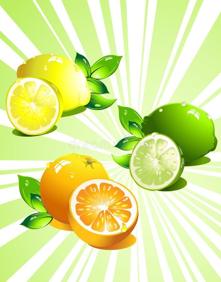 set vektor för citrusfrukt royaltyfri illustrationer