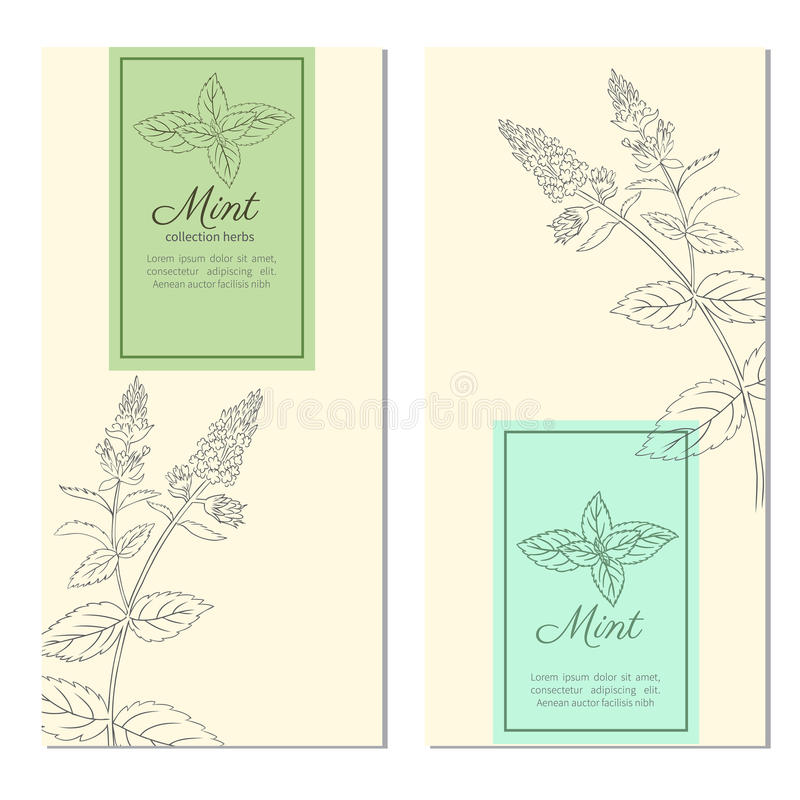 Set of vertical vintage banners, labels with sketch mint leaves, Designed vector frame with blossom peppermint and space royalty free illustration