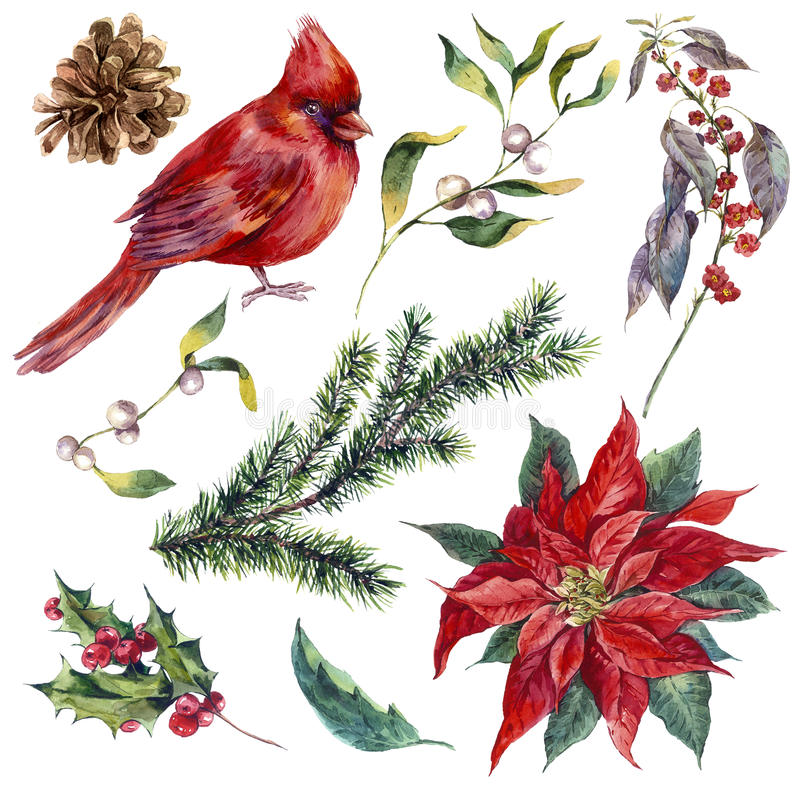 Set vintage watercolor Christmas elements of holly stock illustration