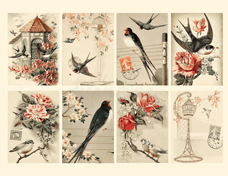 Set von acht Weinlese-Art-Vogel-Marken lizenzfreie abbildung