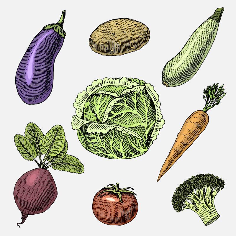 Set warzywa, jarski jedzenie, rośliny, rocznik przyglądająca kapusta, oberżyna i beetroot ręki rysujący, grawerujący, ilustracji