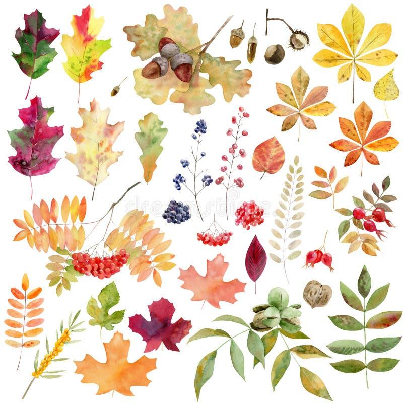 Set watecolor jesieni liści dokrętek jagody ilustracji