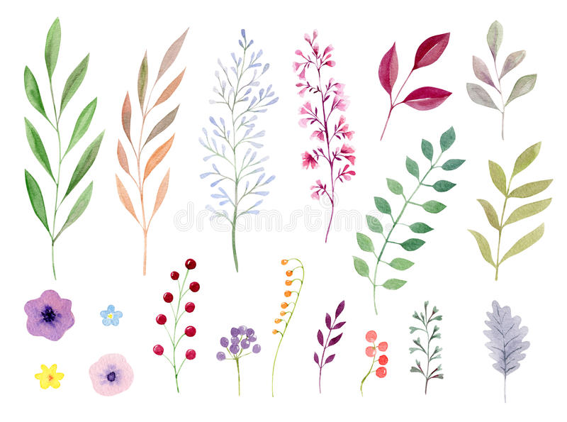 Set of watecolor leaves and flowers. Set collection arrangement poster of hand painted drawn watercolor cliparts ofleaves and flowers stock illustration