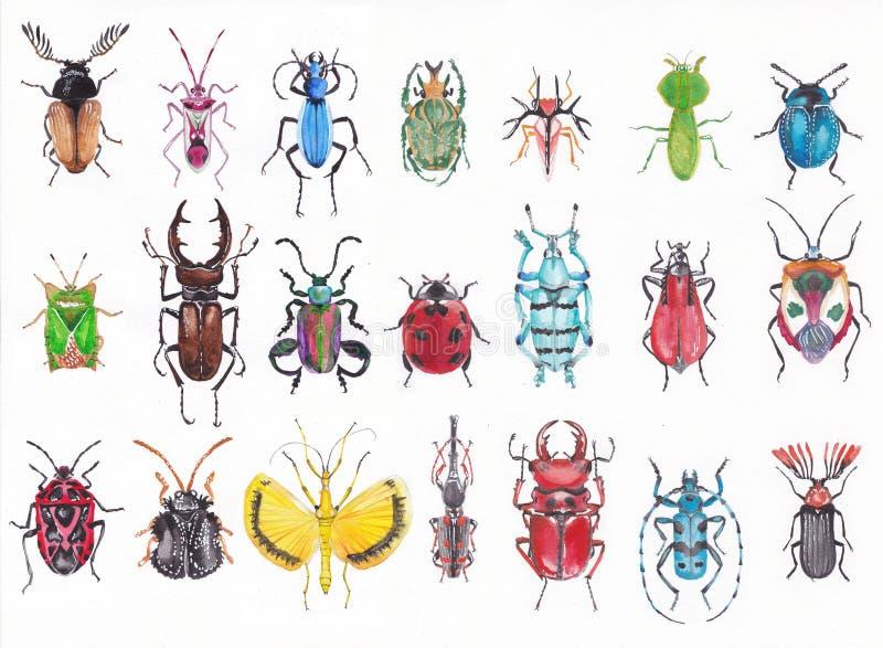 Set of watercolor beetles. stock illustration