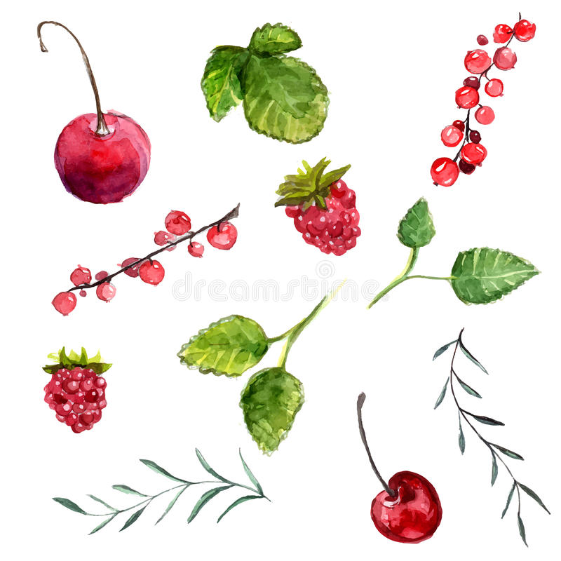Set of watercolor berries cherry, red currant and raspberry, leaves of mint and rosemary. Vector design elements isolated on white stock illustration