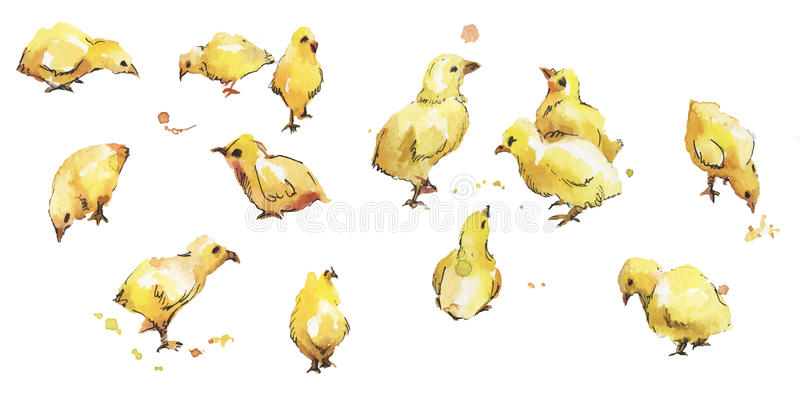 Set of watercolor bird baby chickens vector illustration