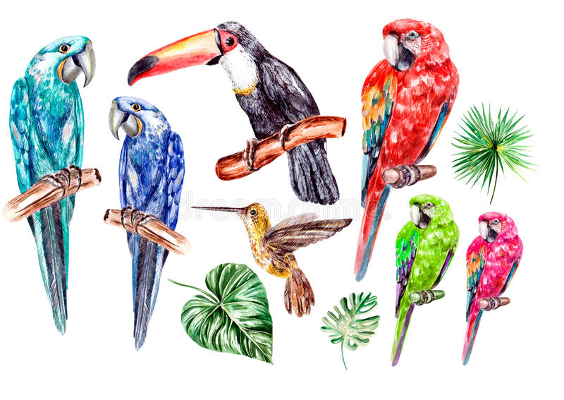 Set with watercolor birds, parrot, toucan and colibri. royalty free illustration