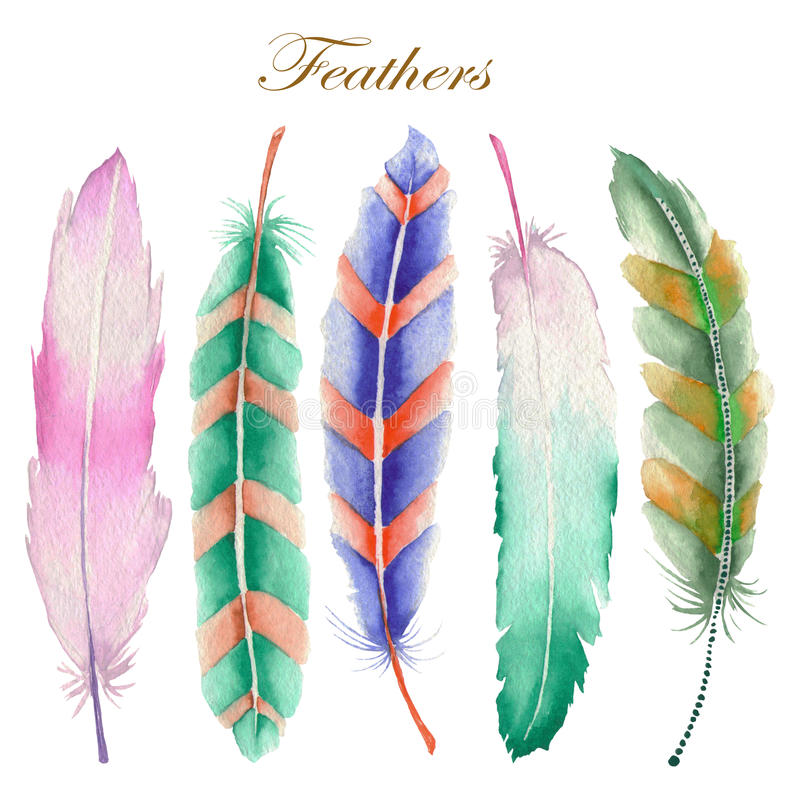 Set of watercolor feathers vector illustration