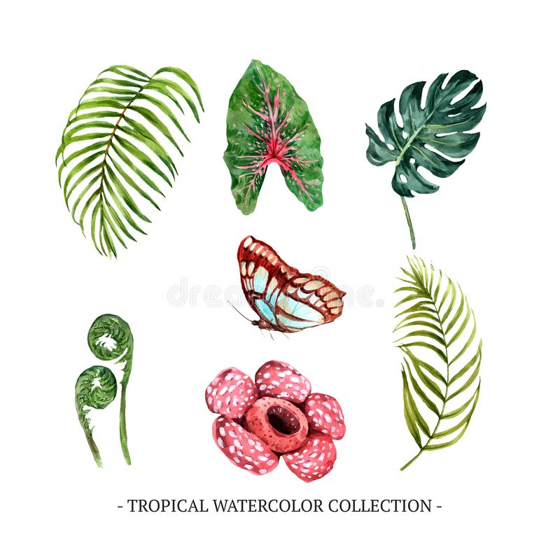 Set of watercolor foliage, floral, butterfly illustration for decorative use. D stock photos