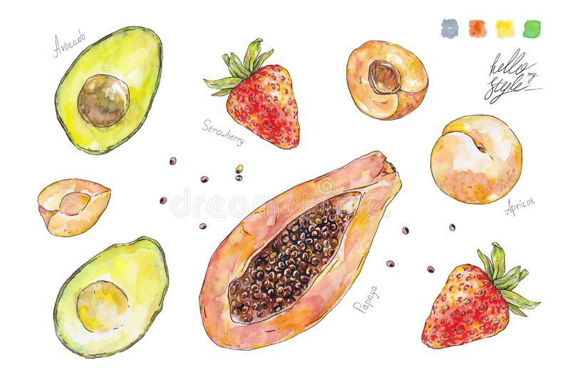 Set of watercolor fruits and berries isolated on white background. Handwork summer draw. Hello my style stock image