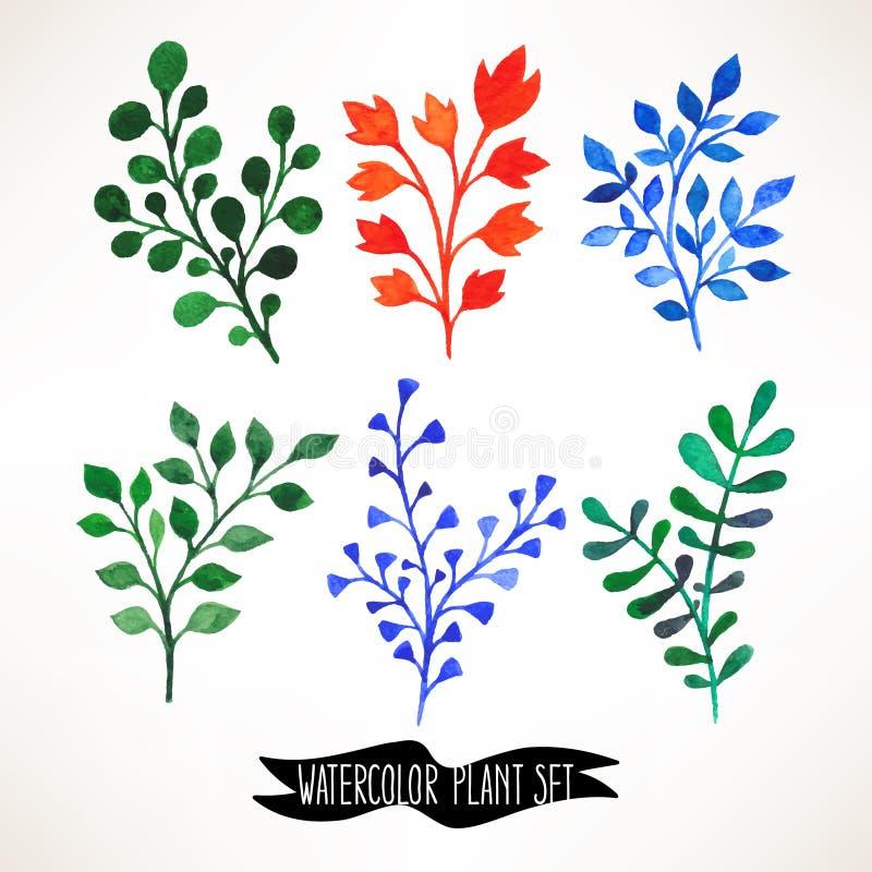 Set of watercolor plants vector illustration
