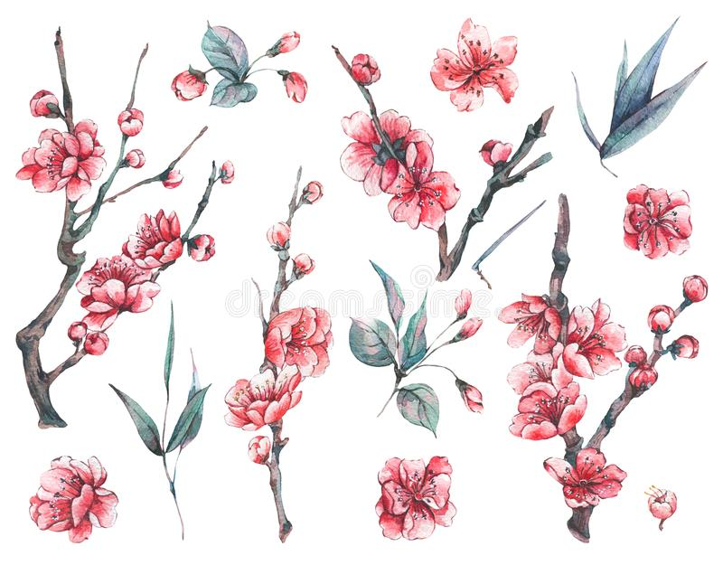 Set of watercolor spring blooming floral elements stock illustration