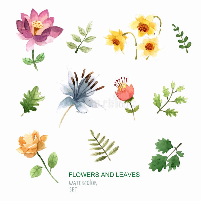 Set of watercolor vector flowers and leaves in vector. Perfect floral elements for save the date card. royalty free stock image