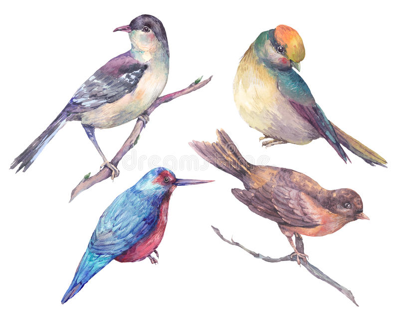 Set of watercolors isolated birds royalty free illustration