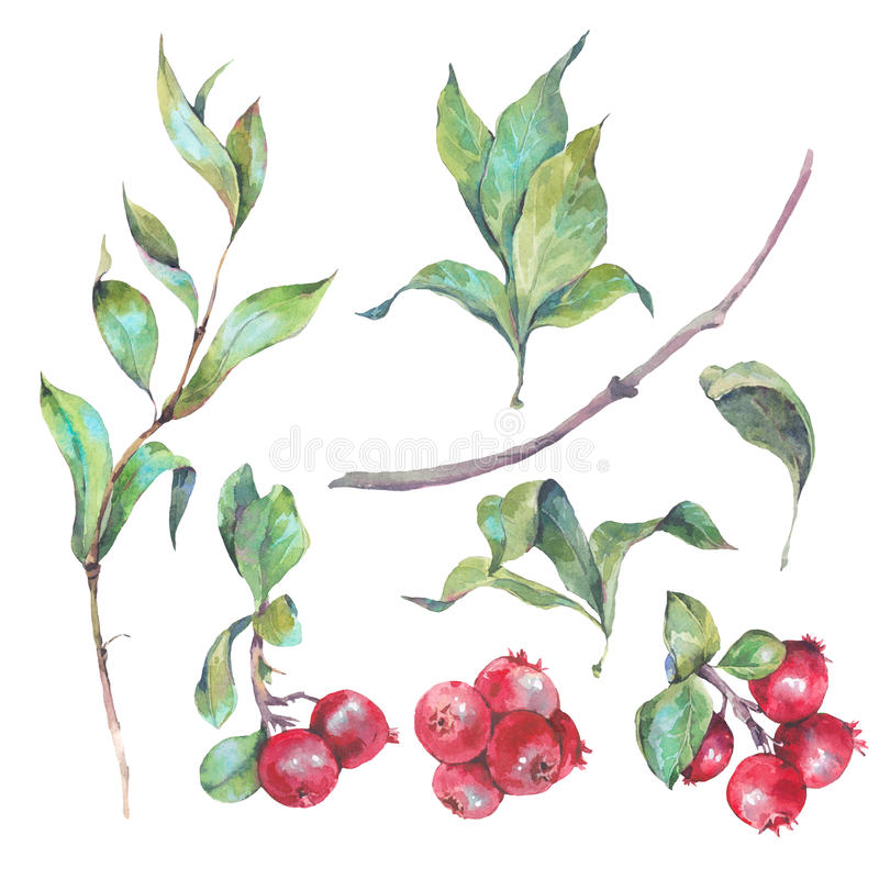 Set of watercolors red berries royalty free illustration