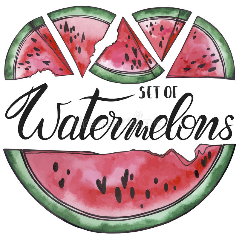 Set of watermelons vector illustration