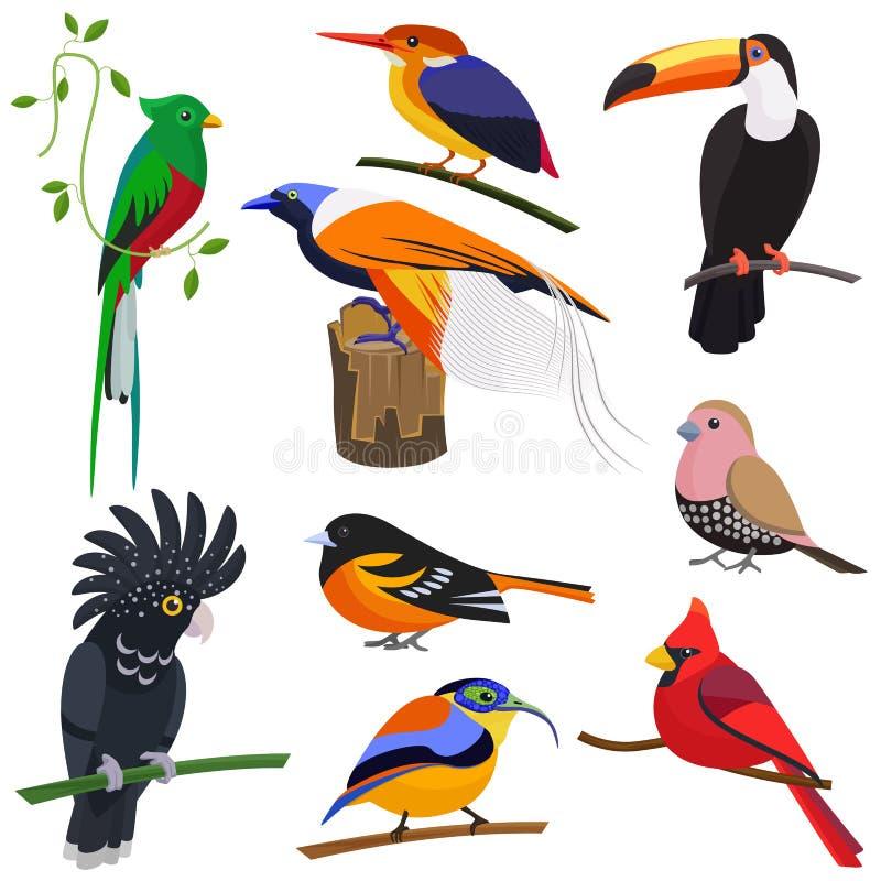 Set wektorowej płaskiej kreskówki tropikalni egzotyczni ptaki ustawiający ilustracji