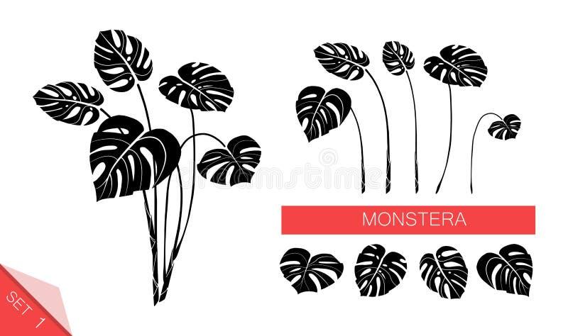 Set wektorowi monstera liście odizolowywający na białym tle Egzotyczne tropikalne ro?liny Projekta element dla karty, druk royalty ilustracja
