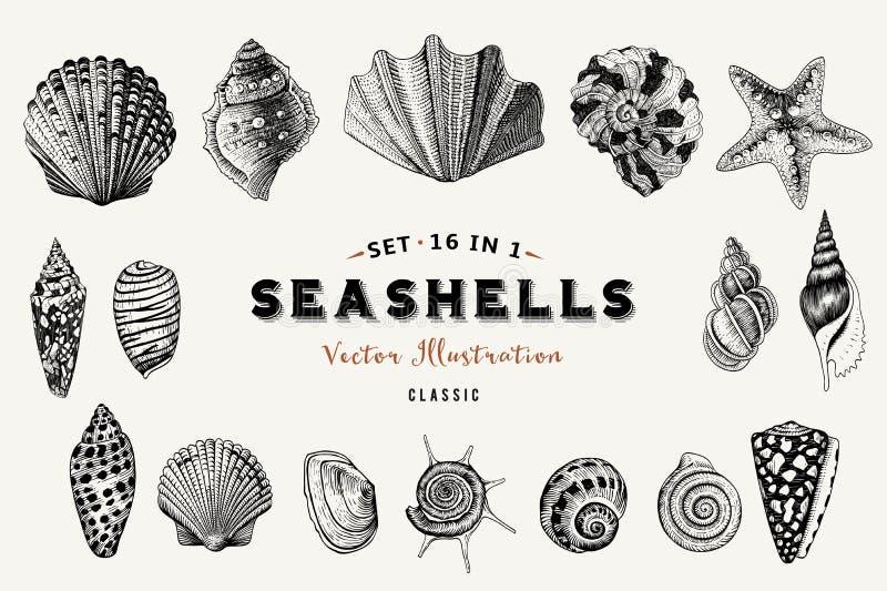 Set wektorowi roczników seashells Dziewięć czarnych ilustracj skorupy ilustracja wektor
