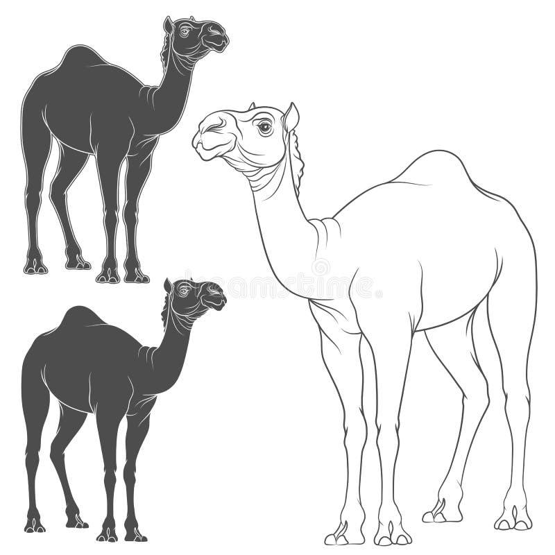 Set wektorowy wizerunek wielbłąd Odosobneni przedmioty na bielu ilustracja wektor