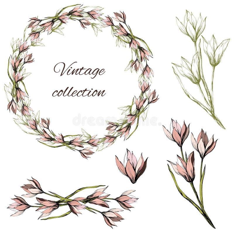 Set wektoru wianek i kwiaty ilustracyjny lelui czerwieni stylu rocznik Atramenty rysujący różowi tulipany na białym tle Wiosna se royalty ilustracja