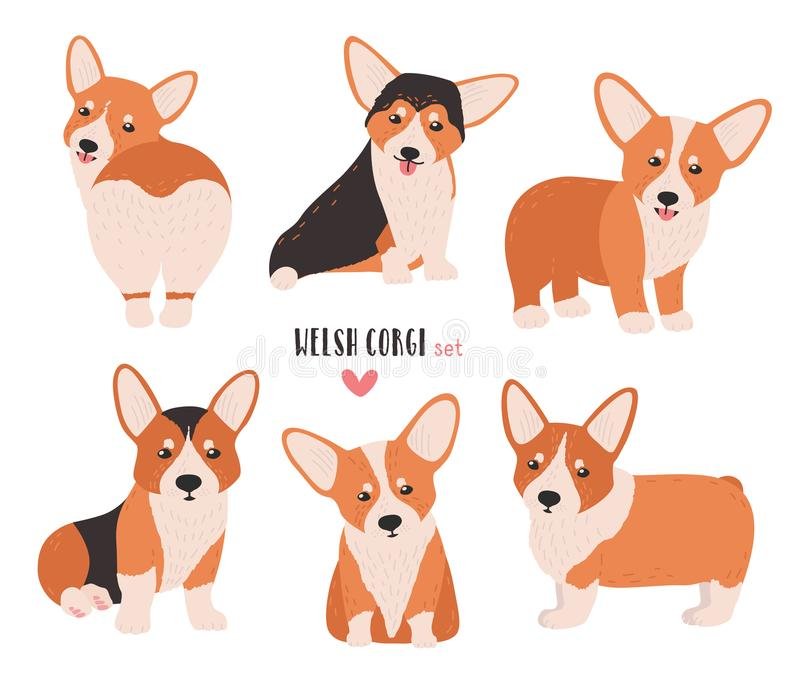 Set of welsh corgi in different postures. Small cute dog of herding breed isolated on white background. Funny pet animal royalty free illustration