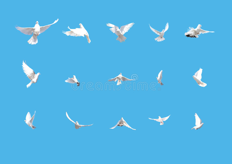 Set of white doves flying isolated on blue royalty free stock images
