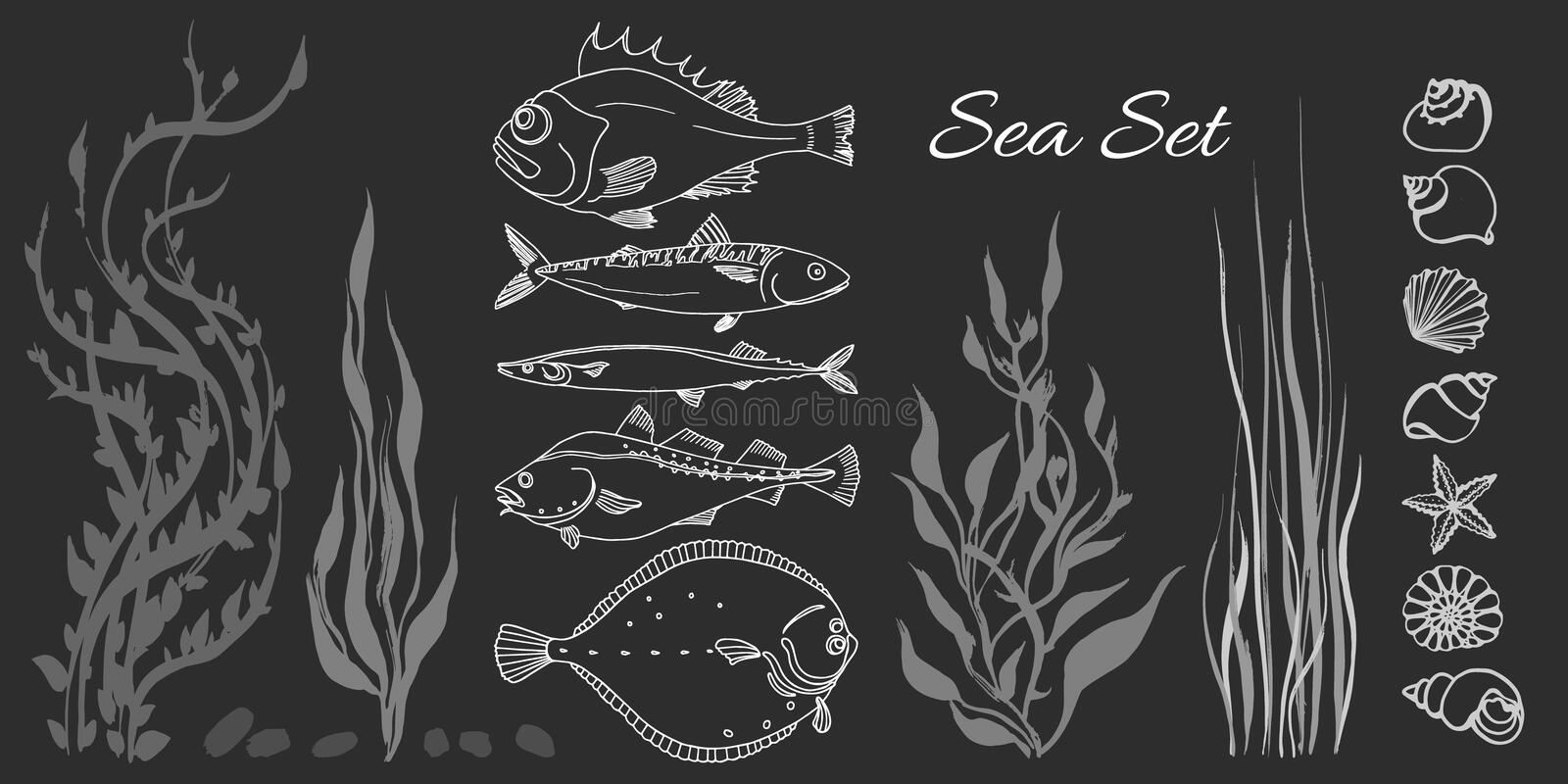 Set of white sea fish, seaweed, seashell. Perch, cod, mackerel, flounder, saira. Set of white sea fish, seaweed, seashell on black background. Perch, cod royalty free illustration