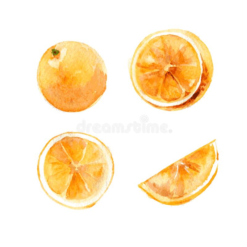 Set of whole and cut oranges on a white background. Illustration, hand-drawn watercolor. Vector. royalty free illustration