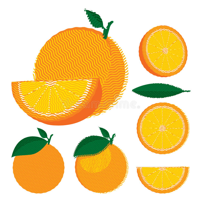 Set of whole and halved oranges with leaves vector illustration