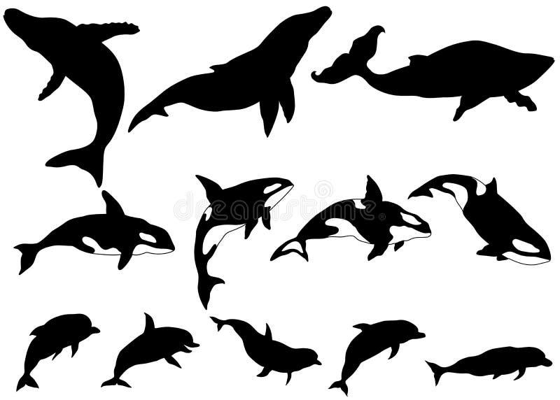 Set wieloryb, zabójcy wieloryb, delfin sylwetki ilustracji