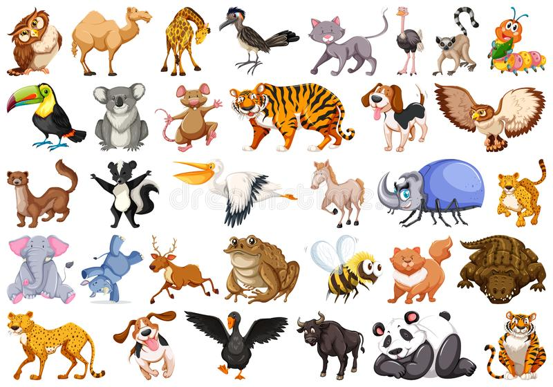 Set of wild animal. Illustration vector illustration