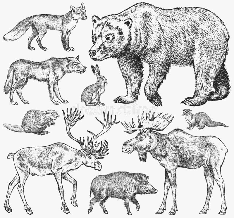 Set of Wild animals. Brown Grizzly Bear Forest Moose Red Fox North Boar Wolf Sable Badger Gray Hare Reindeer River otter royalty free illustration