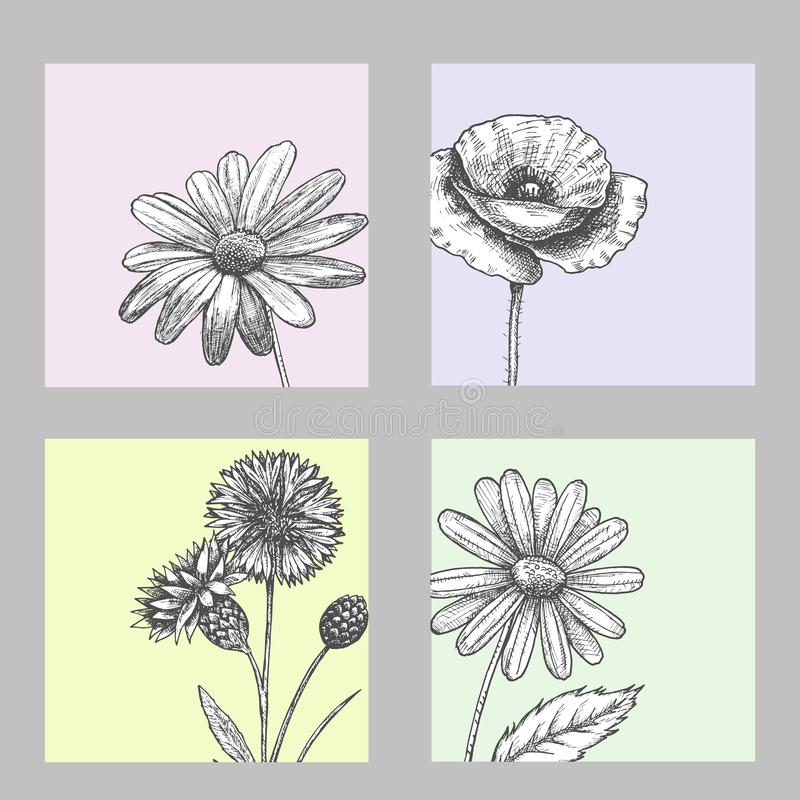 Set of wild, black and white field flowers - poppy, chamomile, cornflower, daisy, sketch vector illustration stock illustration