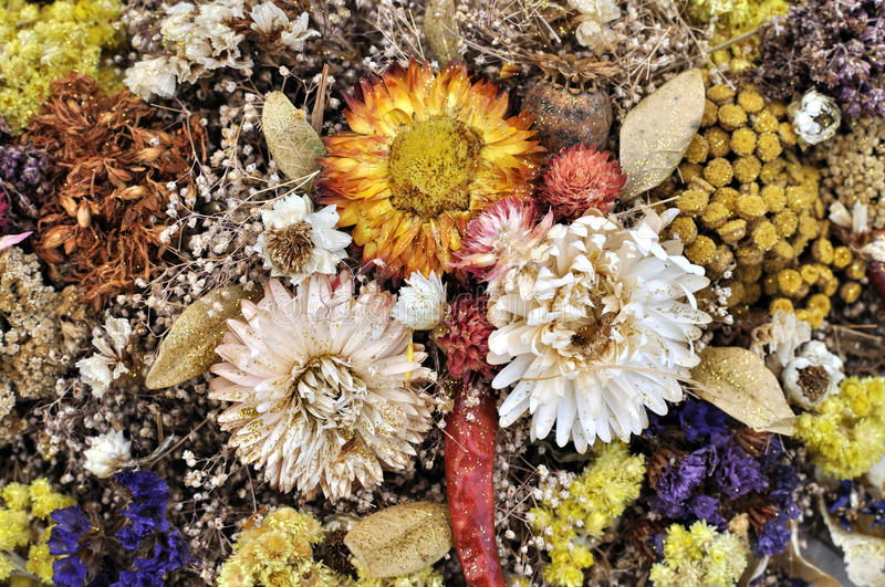 Set of wild dried flowers. In abstract composition stock photo